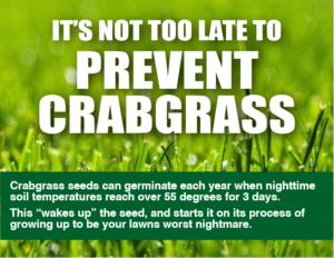 When to Apply Crabgrass Preventer | Blain's Farm & Fleet Blog