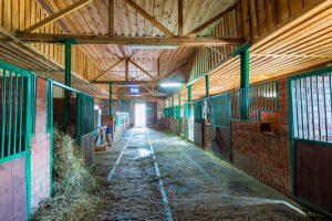 What is Barn Lime & Why Do I Need It? | Blain's Farm & Fleet